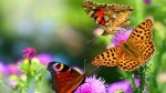 Collorful-Butterflies-hd-wallpaper-1024x576